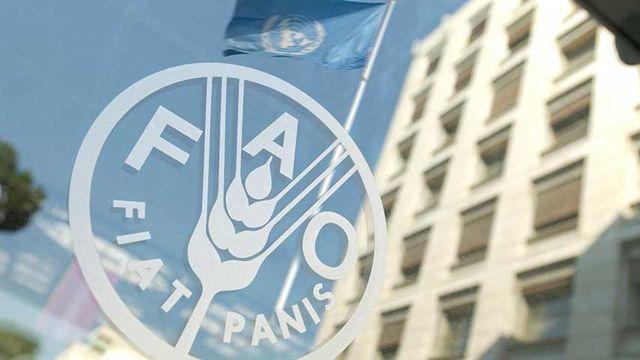 FAO, ONU