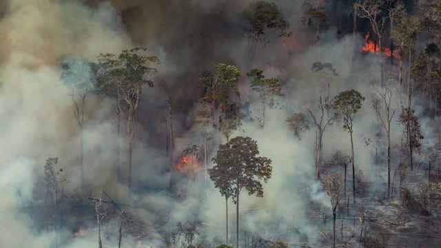 La creciente desforestación agravó los incendios.