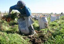 Agricultores presentan plan a la AN por $ 6.800 millones.