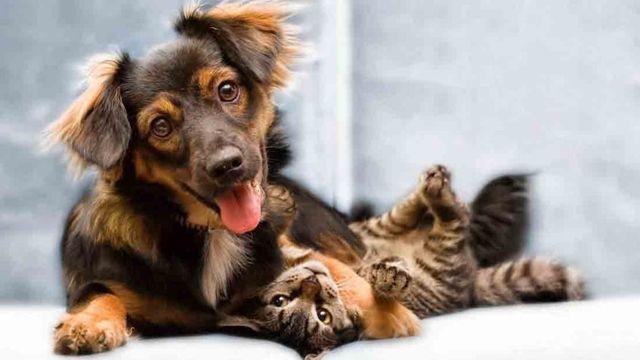 Perro, Día de los Animales