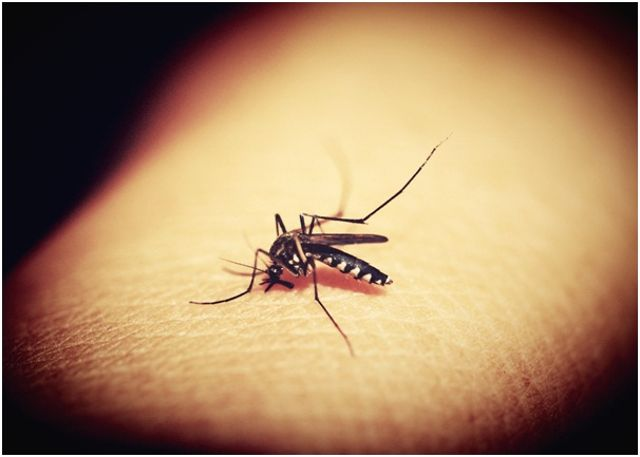 Casos de malaria