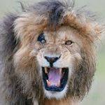 La leuy de la selva