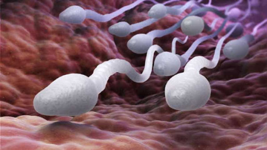 Cómo nadan los espermatozoides humanos